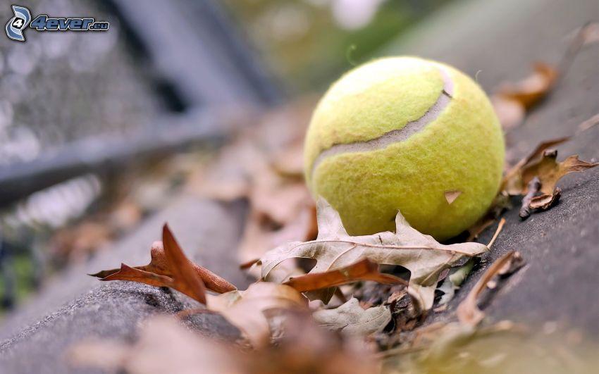 tennis ball, fallen leaves