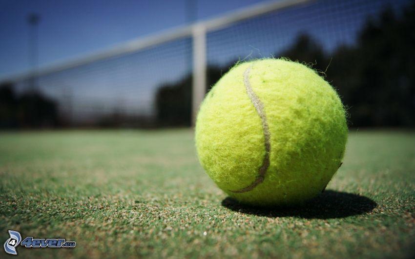 tennis ball, net