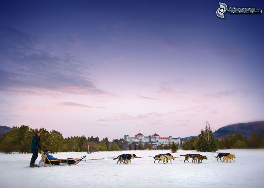 dog sledding, manor-house