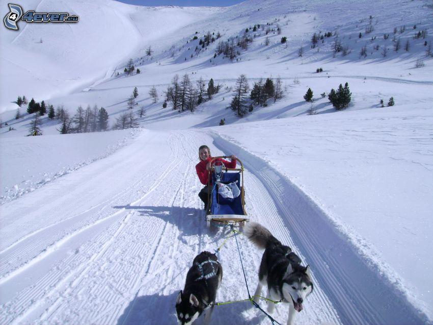dog sledding, snow, mountains