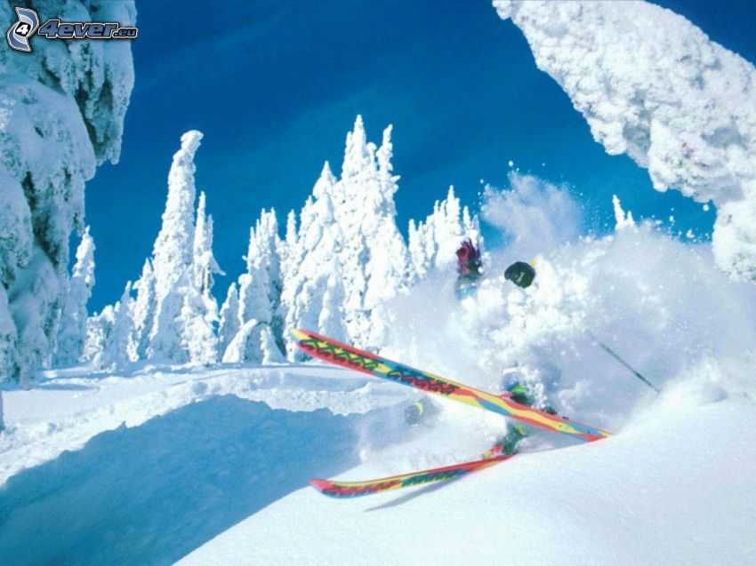 extreme skiing, accident, snowy trees