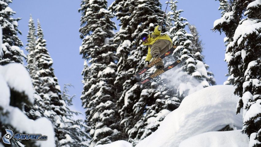 extreme skiing, snowy forest, coniferous trees