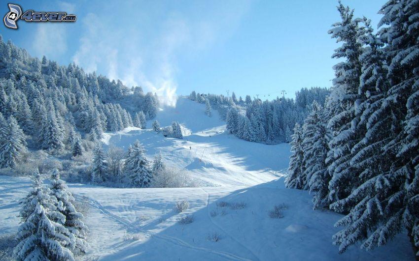 ski slope, skiers, snowy landscape