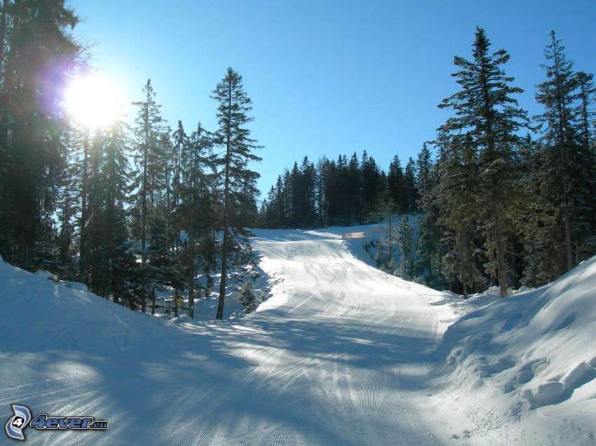 ski slope, sun, coniferous forest