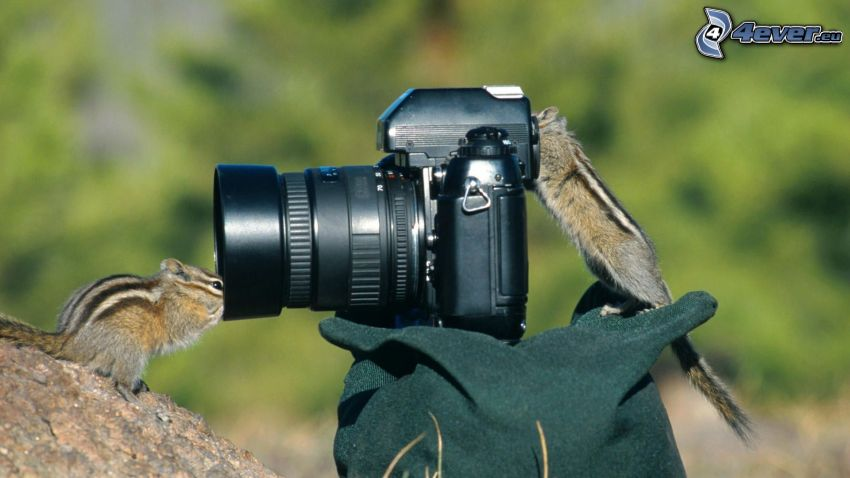 camera, squirrels