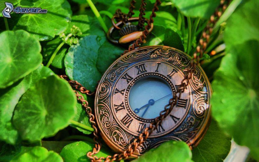 historic clocks, green leaves