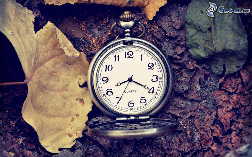 historic clocks, leaves