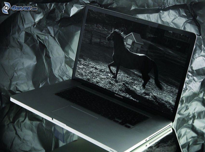MacBook, horse, black and white