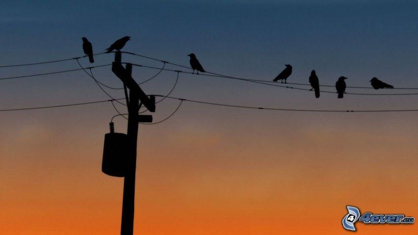 power lines, birds, evening sky