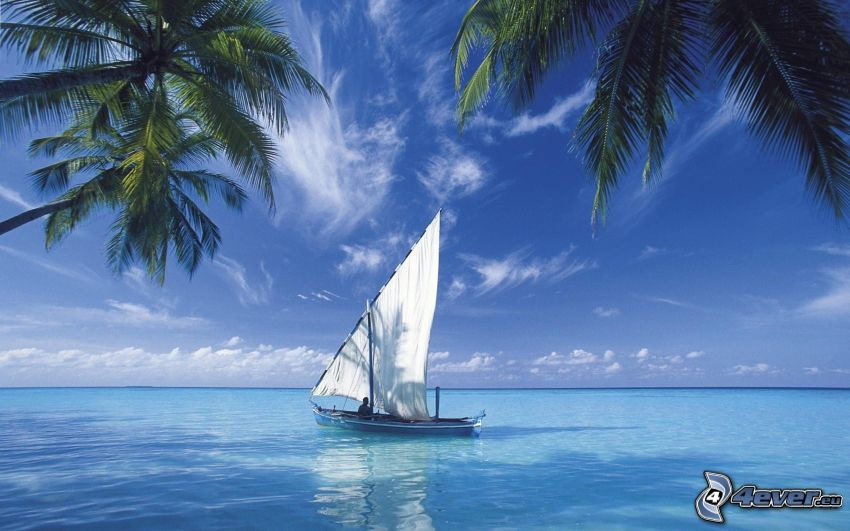 boat at sea, open sea, palm trees