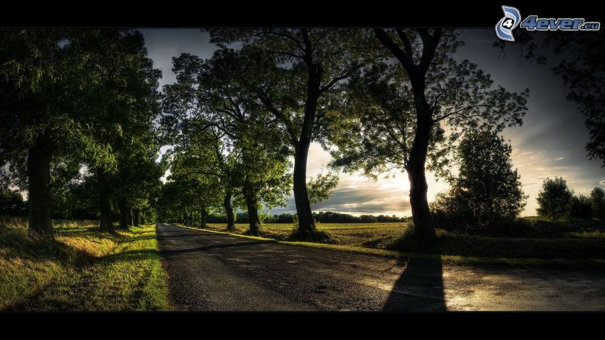 evening road, avenue of trees, sunset, tree shadow