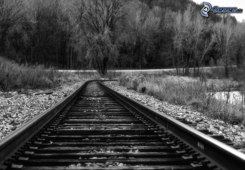 rails, forest, black and white photo
