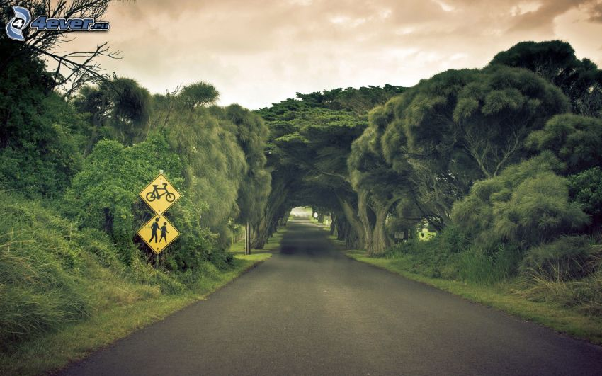 road, avenue of trees, traffic signs, green tunnel