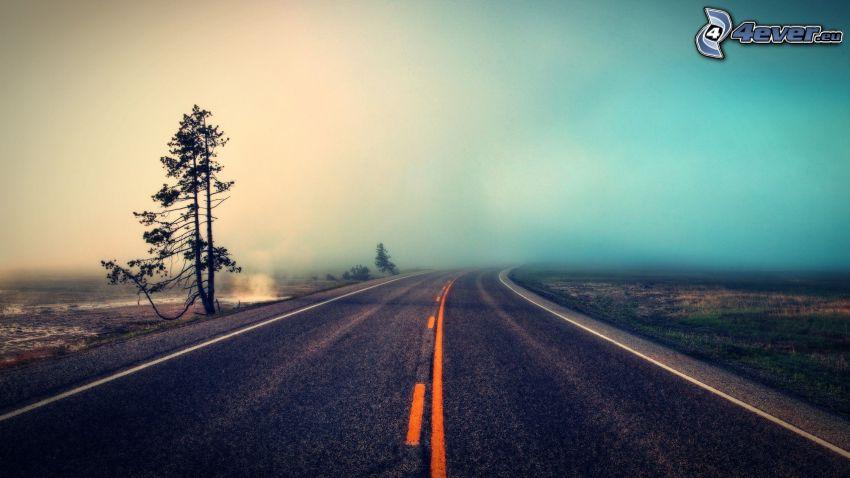 road, dry tree, fog
