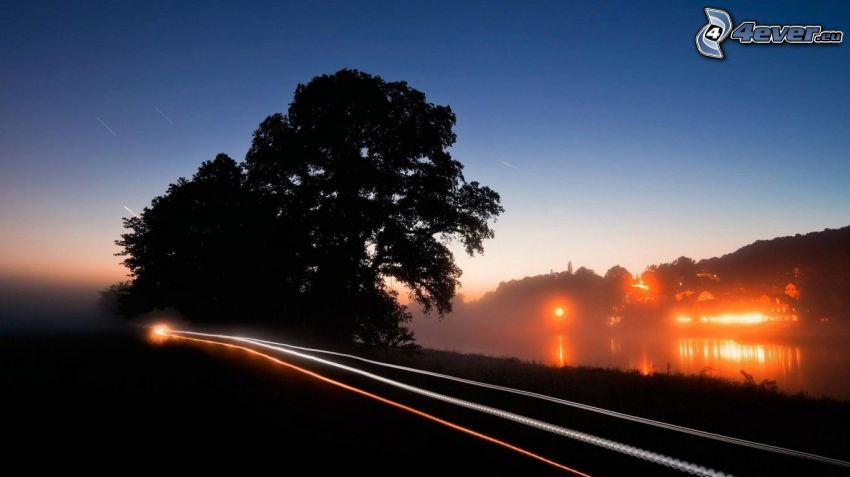 road, lights, evening, silhouettes of the trees