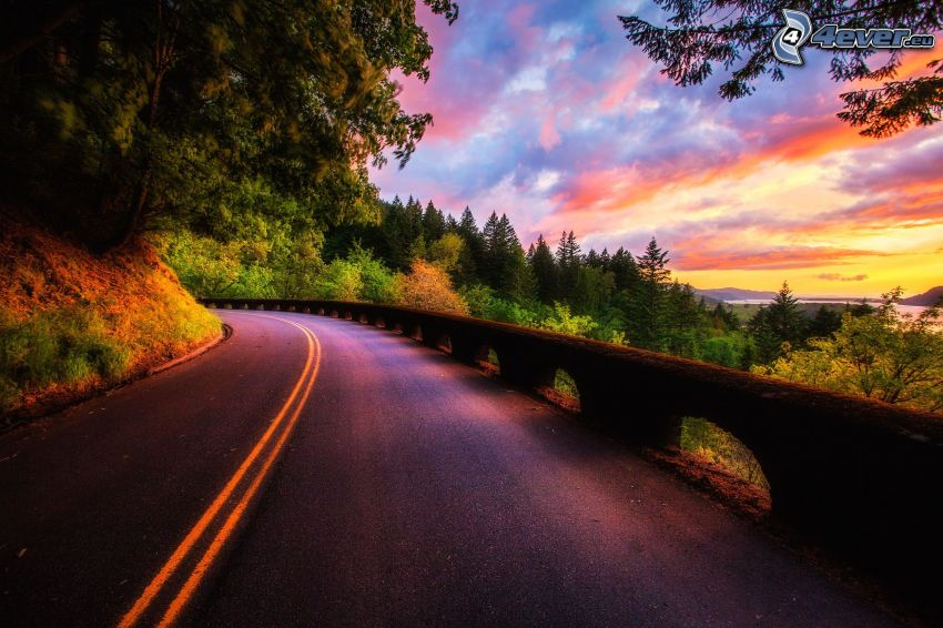 road, purple sky, coniferous forest, road curve