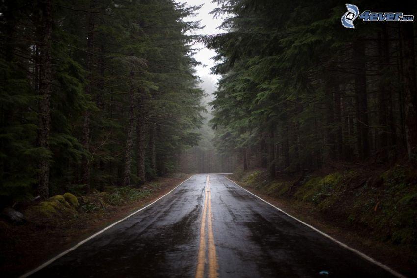 road through forest, dark forest, USA