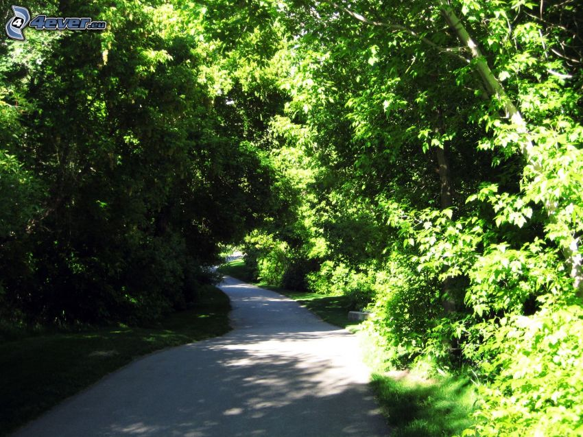 road through forest, greenery
