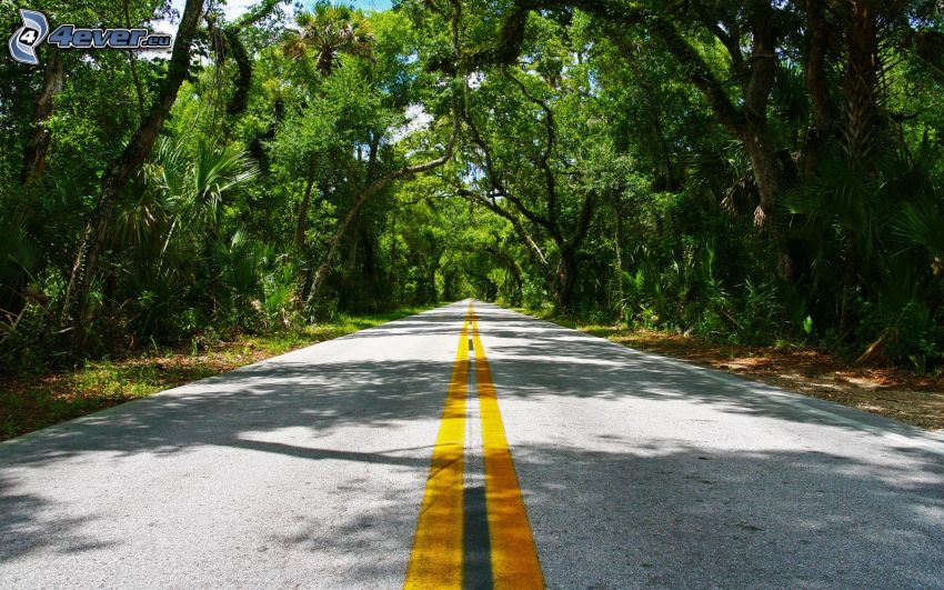 road through forest, jungle