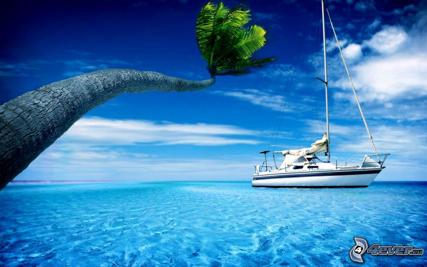sailing boat, palm tree, sea