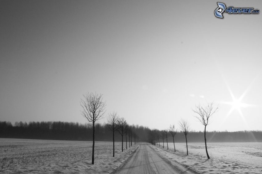 snow-covered road, snow, trees