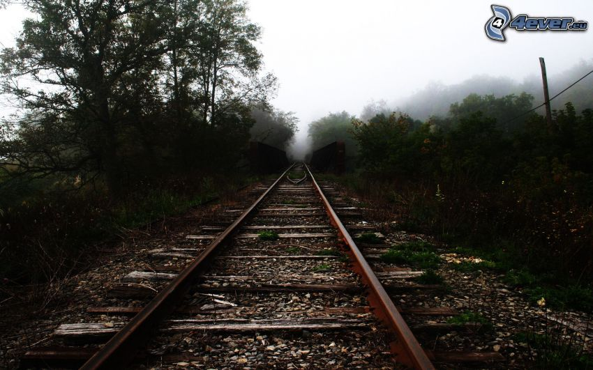 old rails, trees, fog