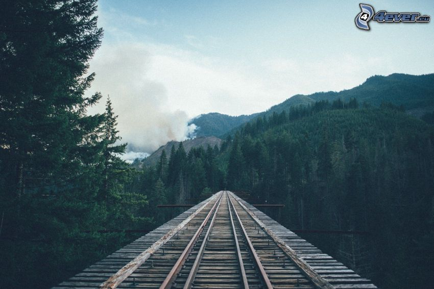 rails, coniferous forest, wooden bridge