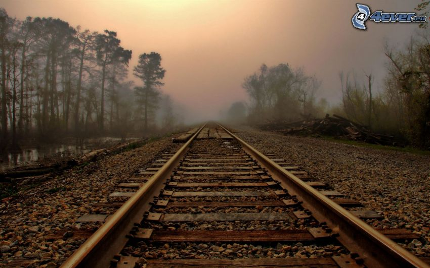 rails, fog, forest
