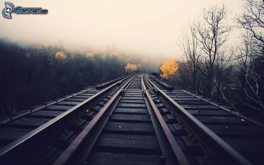 rails, forest, fog