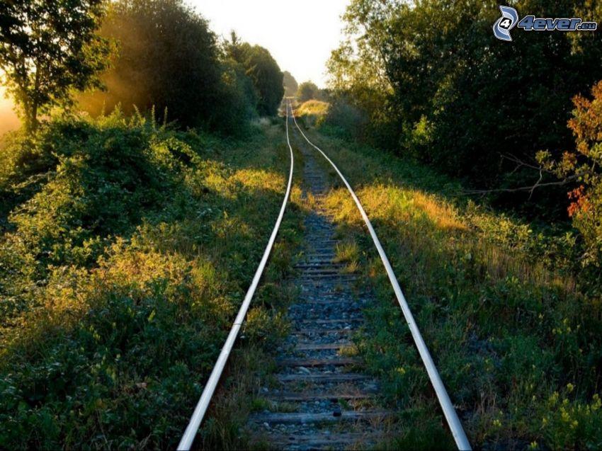 rails, greenery