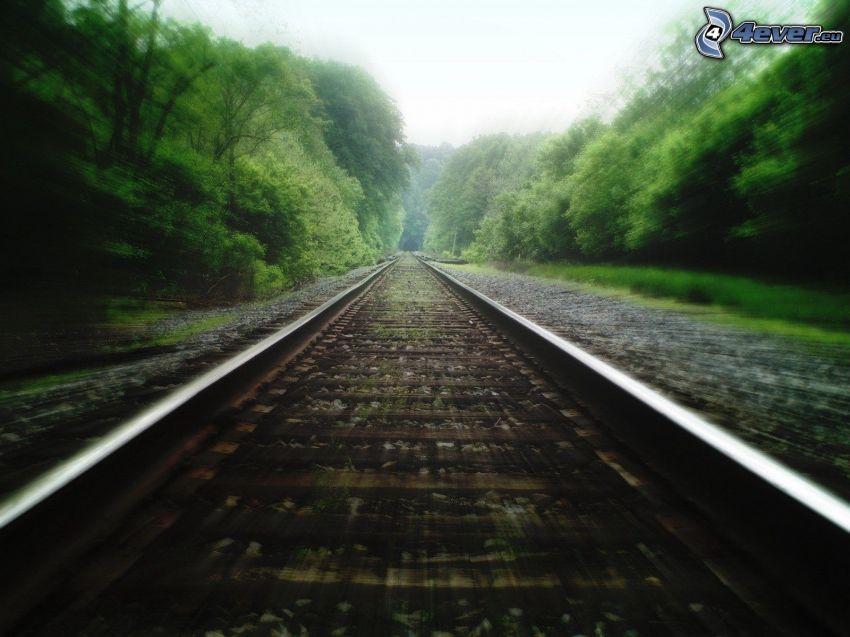 rails, railway, trees