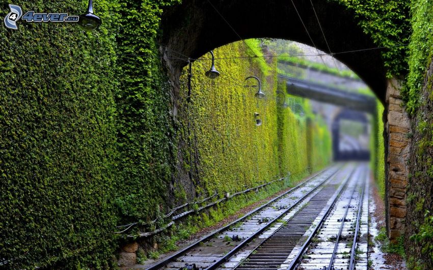 railway, wall, green leaves