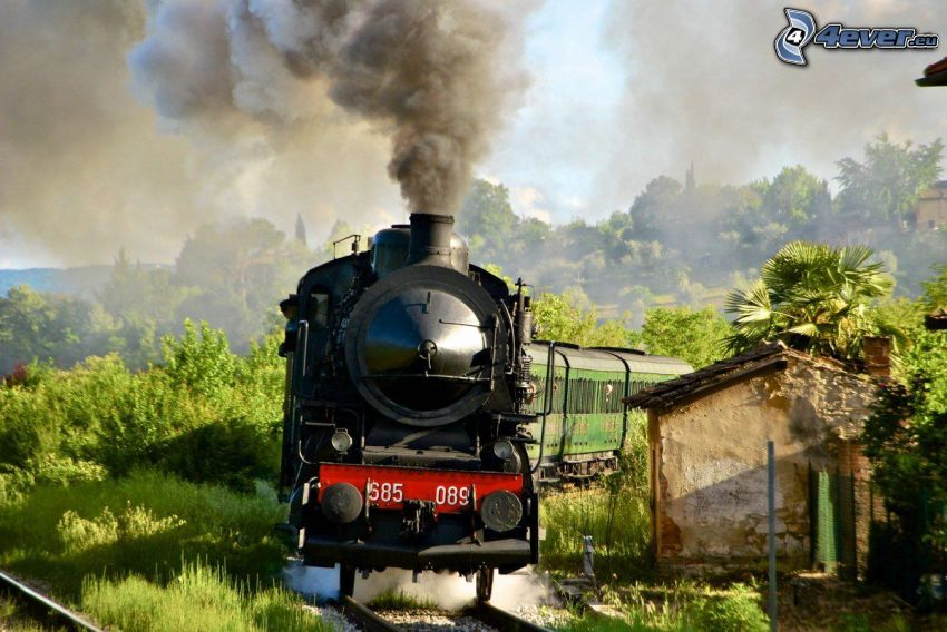 steam locomotive, train, trees