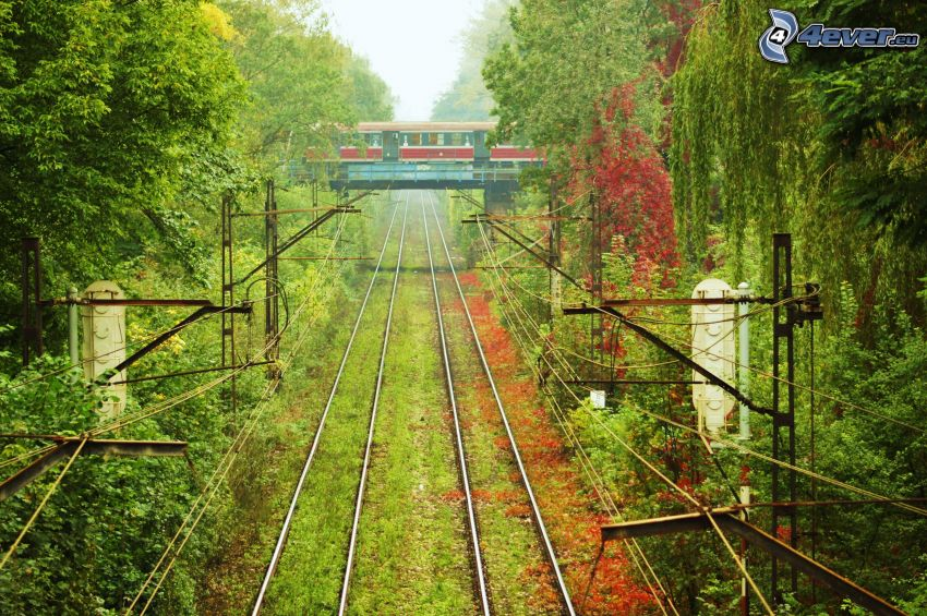 train, railway bridge, rails, trees
