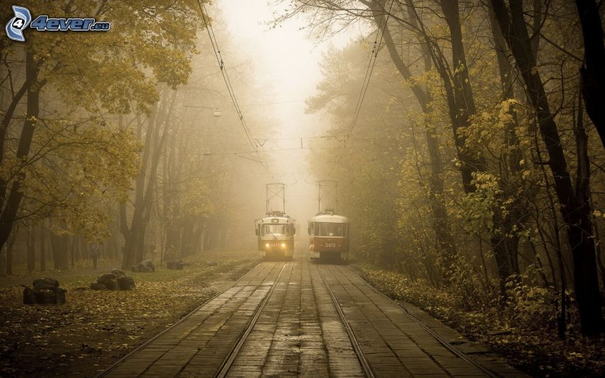 trams, tramway track, forest