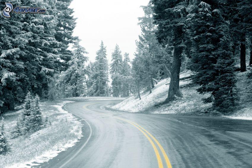 winter road, snowy trees